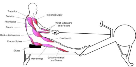 Used Rowing Machine >> Rowing Machine Muscles Where You Will Get Strong